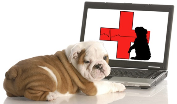 Makati Dog and Cat Hospital